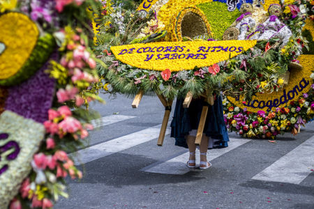 Desfile Silleteros (11)